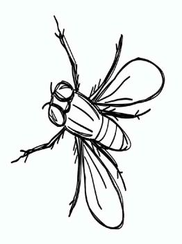 Fly-coloring-pages-23
