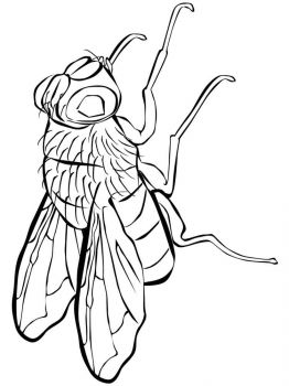 Fly-coloring-pages-25