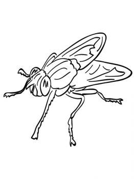 Fly-coloring-pages-28