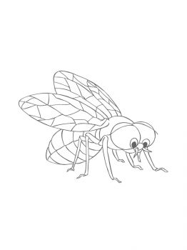 Fly-coloring-pages-8