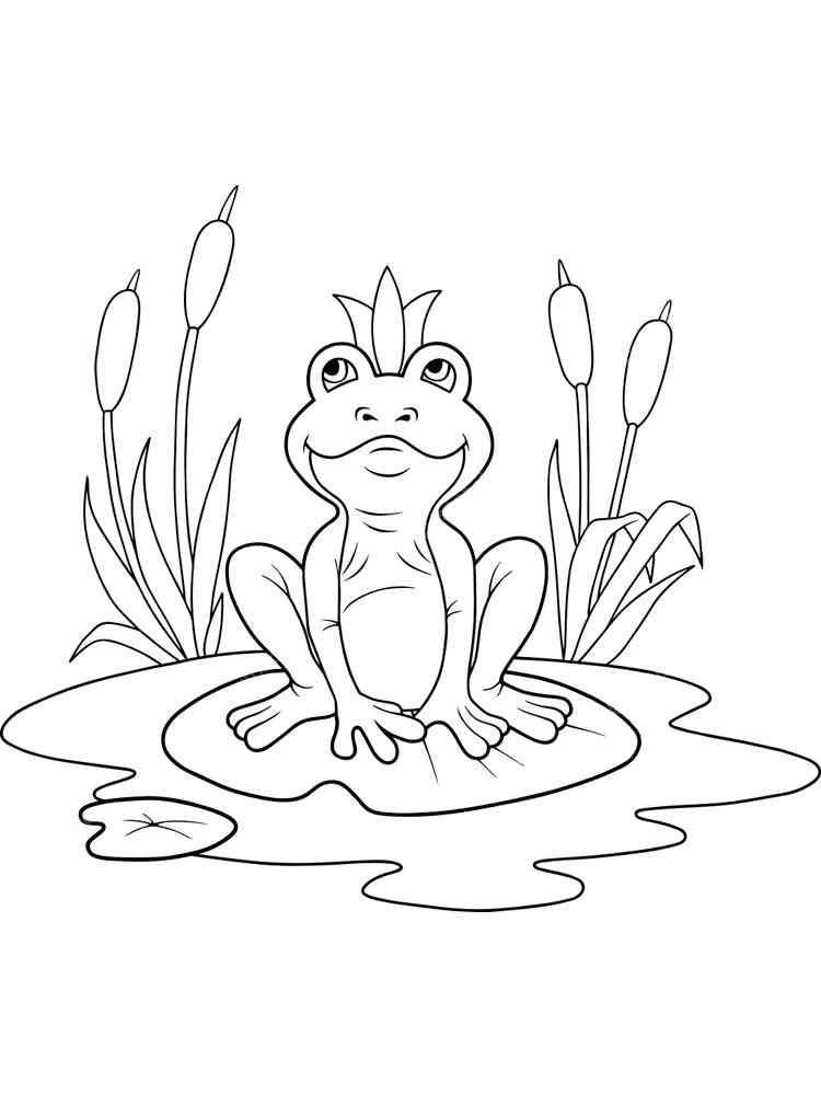 ausmalbilder frosch  malvorlagen kostenlos zum ausdrucken