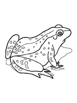 Frog-coloring-pages-19