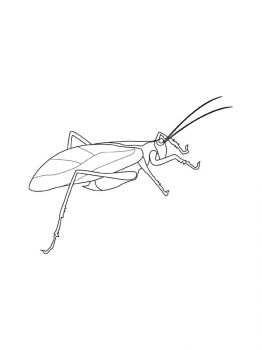 Grasshopper-coloring-pages-1