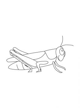 Grasshopper-coloring-pages-11