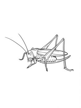Grasshopper-coloring-pages-20