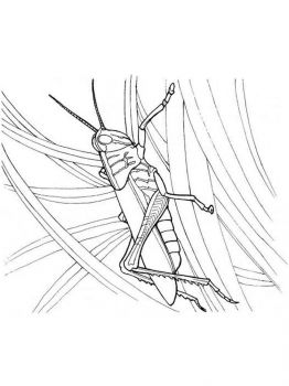 Grasshopper-coloring-pages-23
