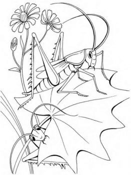 Grasshopper-coloring-pages-25