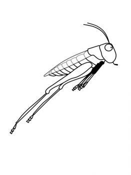 Grasshopper-coloring-pages-28
