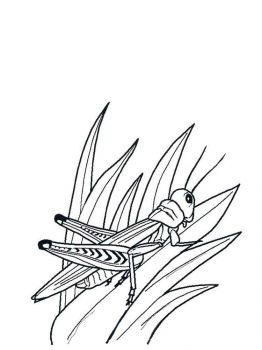 Grasshopper-coloring-pages-30