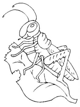 Grasshopper-coloring-pages-33