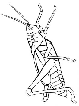 Grasshopper-coloring-pages-34