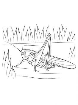 Grasshopper-coloring-pages-7