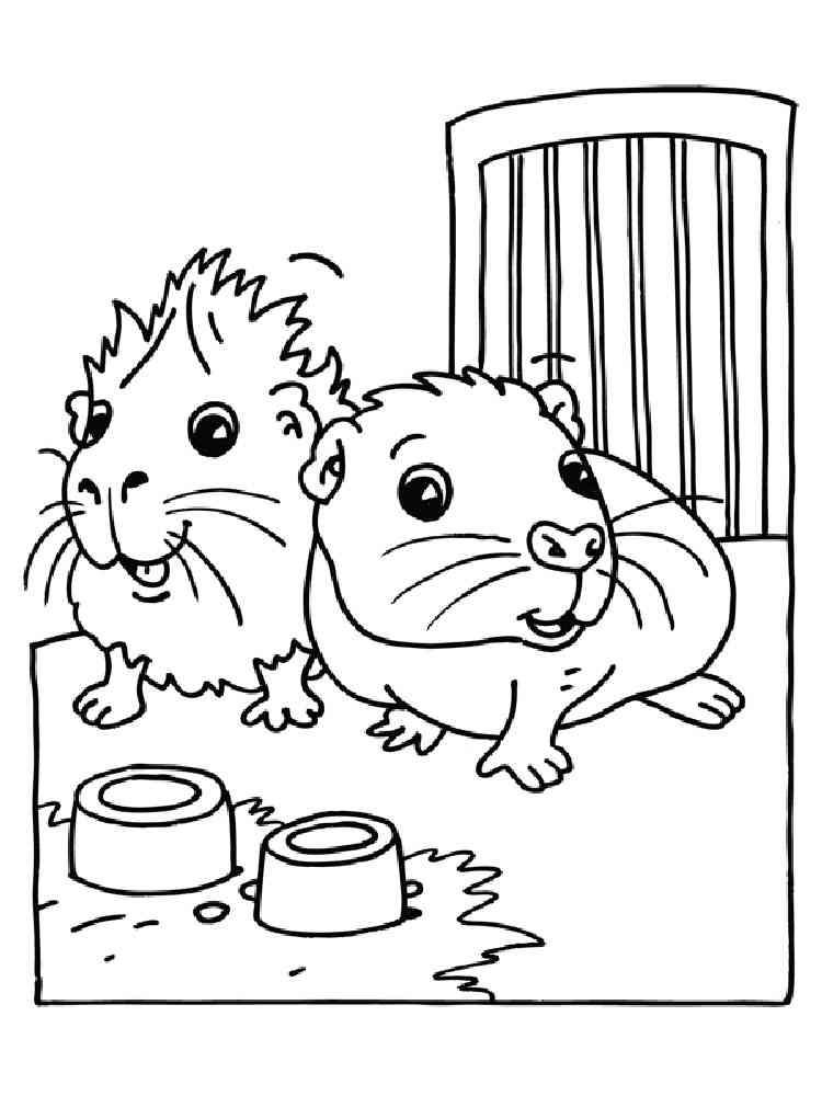 ausmalbilder hamster  malvorlagen kostenlos zum ausdrucken