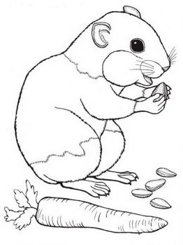 Hamster-animal-coloring-pages-340