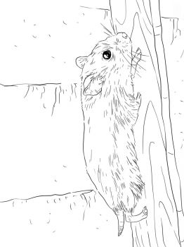 ausmalbilder hamster - malvorlagen kostenlos zum ausdrucken
