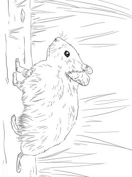 Hamster-animal-coloring-pages-342
