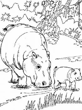 Hippopotamus-animal-coloring-pages-345