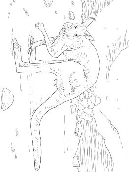 Kangaroo-animal-coloring-pages-341