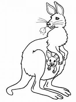 Kangaroo-animal-coloring-pages-347