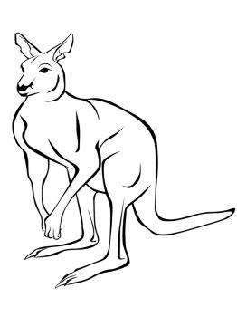 Kangaroo-animal-coloring-pages-351