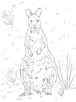 Kangaroo-animal-coloring-pages-353