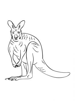 Kangaroo-animal-coloring-pages-356