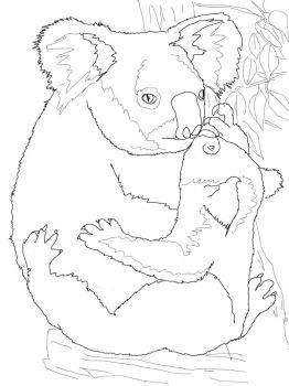 Koala-animal-coloring-pages-349