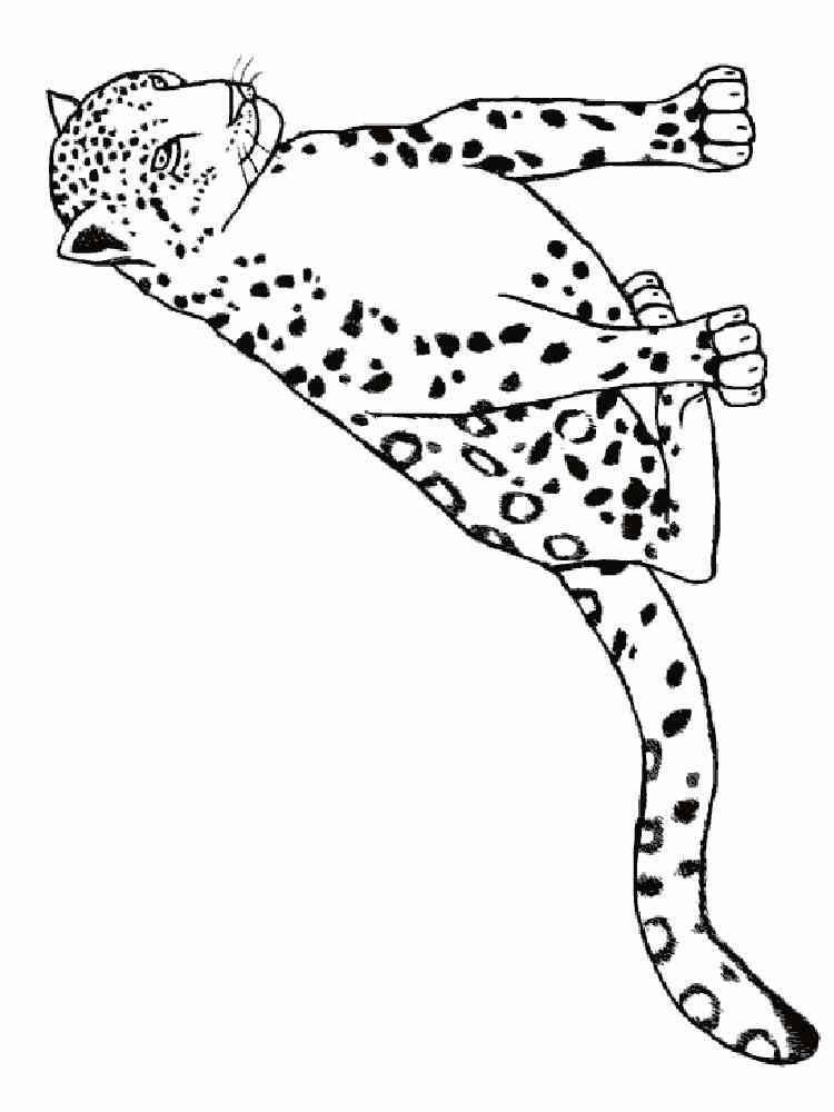 ausmalbilder leopard  malvorlagen kostenlos zum ausdrucken