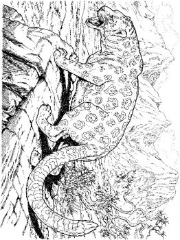 Leopard-animal-coloring-pages-336