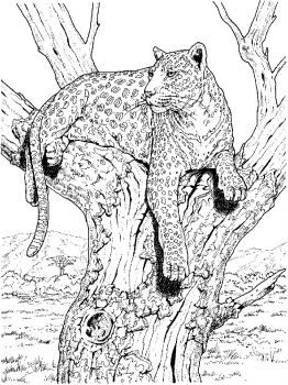 Leopard-animal-coloring-pages-338