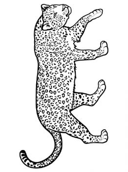 Leopard-animal-coloring-pages-343