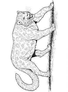 Leopard-animal-coloring-pages-345