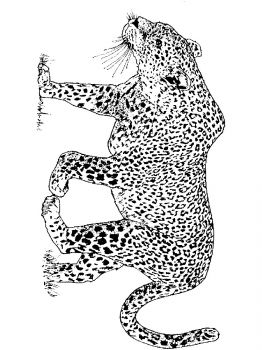Leopard-animal-coloring-pages-346