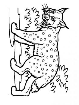 Lynx-animal-coloring-pages-335