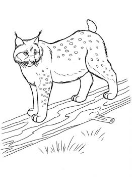 Lynx-animal-coloring-pages-337