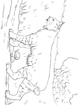 Lynx-animal-coloring-pages-348