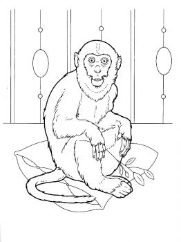 Monkey-animal-coloring-pages-341