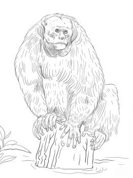 Monkey-animal-coloring-pages-348