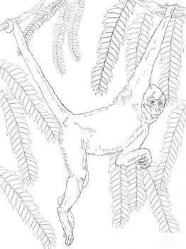 Monkey-animal-coloring-pages-349