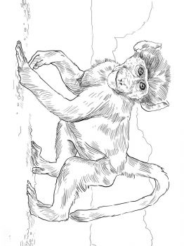Monkey-animal-coloring-pages-351