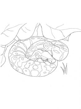 Python-coloring-pages-3