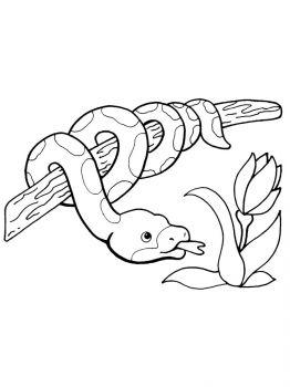 ausmalbilder python - malvorlagen kostenlos zum ausdrucken