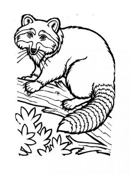 Raccoon-animal-coloring-pages-336