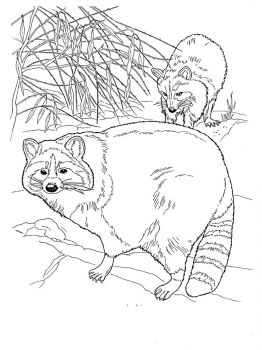 Raccoon-animal-coloring-pages-343
