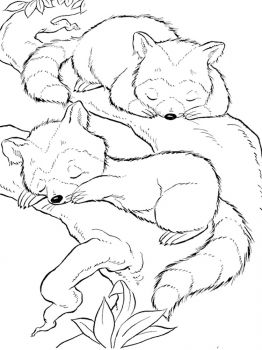 Raccoon-animal-coloring-pages-347