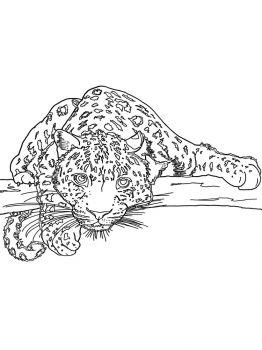 Snow-Leopard-coloring-pages-10