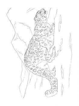 Snow-Leopard-coloring-pages-13