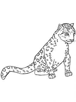 Snow-Leopard-coloring-pages-17