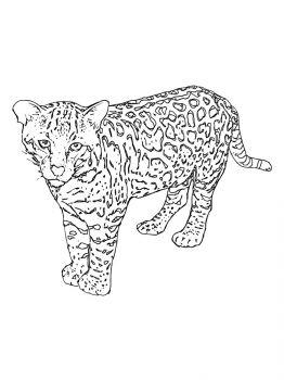Snow-Leopard-coloring-pages-19