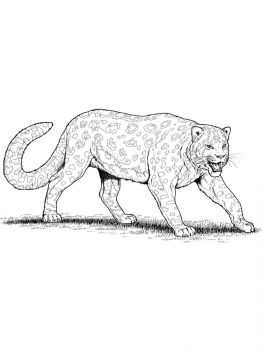 Snow-Leopard-coloring-pages-20